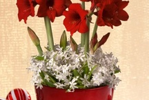 ~Fabulous Flowers/Amaryllis~ / ~Flowers Add Lovely Scents and Splashes of Color to our World~