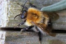 CPM's Photos of Bees