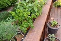 Herbs- bylinky