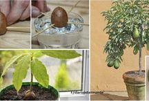 plantar frutos
