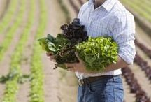 Vegetable and Herb Gardening / ...because nothing tastes as good as homegrown. / by Kate Sanner
