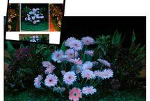 Mini Garden / Jasa pembuatan Dekorasi bunga Mini Garden / Taman mini garden