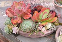 Succulents So Easy To Grow