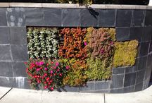 Vertical Gardening / Growing plants vertically in walls, hanging wall planters, or up poles, trellises, etc.