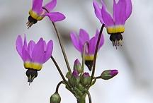 haha / flower