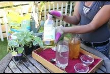 Vegetable Gardening / Vegetable Gardening Videos