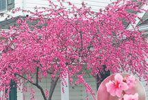 trees/flowers / by Stephanie Moreland