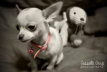 Gisselle Cruz Photography