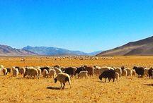 Pangong lake Ladakh / Reflection