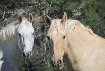 Horses, lifetime love