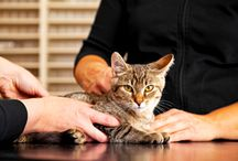 Cat Health Tips / Tips and advice for keeping your feline friend happy and healthy.