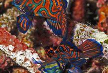 aquarium / Marine tanks, fish and corals