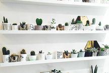 •/pretty plants/•