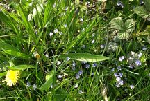 Wildflowers & Wildlife / Things spotted out and about in Yorkshire, UK.