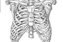 anatomy refs