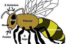 FIAR-The bee tree