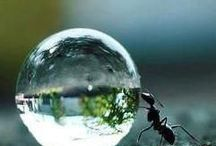Ant bubble / Things
