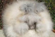 Cute puff