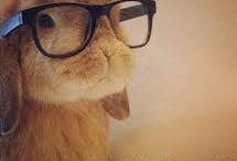 Animal Humour / Animal Humour