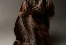 DOG PHOTOGRAPHY / Natural Dogtails - Great for your dog's fur, mentality, and our Earth. www.DogtailsShop.com