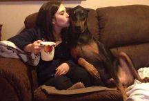 My Small Doberman as Doberman Pupi ,LOVE-DOG,TSTMS2 / DOG main  ...