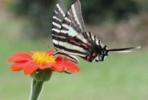 Flowers to attract butterflies and hummingbirds