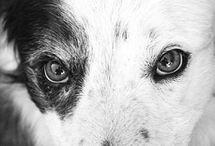 Dog Health / Samson