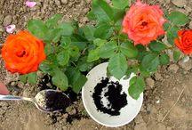 milyen virágok szeretik a kávé zaccot