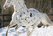 CABALLOS HERMOSOS -WONDERFUL HORSE♥