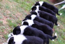 They are  seven puppyes.