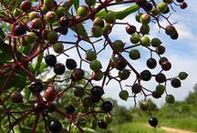 MULTIFRUTS / variedades de frutas do mundo