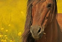 Horse of prettyness