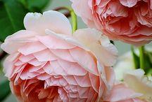 tuinieren en bloemen