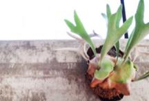 gardening / Tips, tricks, indoor, outdoor, vertical, horizontal.