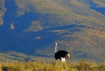 Beautiful South African Landscapes