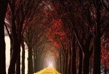 Autumn / My favorite season. / by Ashley Hohnstein