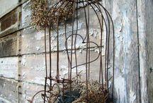 Bird Cages!