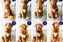 Fun puppy litter photo ideas