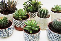 Növények/Plants