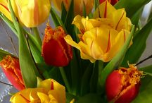 My own pictures / Flowers, blommor, my own flower photos, mina egna blombilder