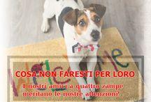 Amici animali / love pets