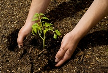 Preparing The Garden / Helpful information to prepare your gardens for the planting season