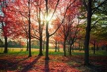 Landschaft/Jahreszeit