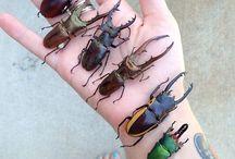 insetos ♡