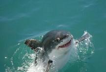 Shark / by Efe Balun