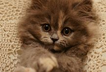 Kittens and Cats / Cutest animals in the world!