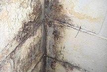 mold & cracks