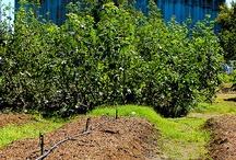 #gardenchat {Farm} / by #gardenchat
