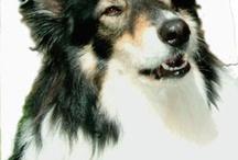 My Dog Shaman / by David Brown