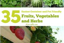 Container gardening for apartments dwellers